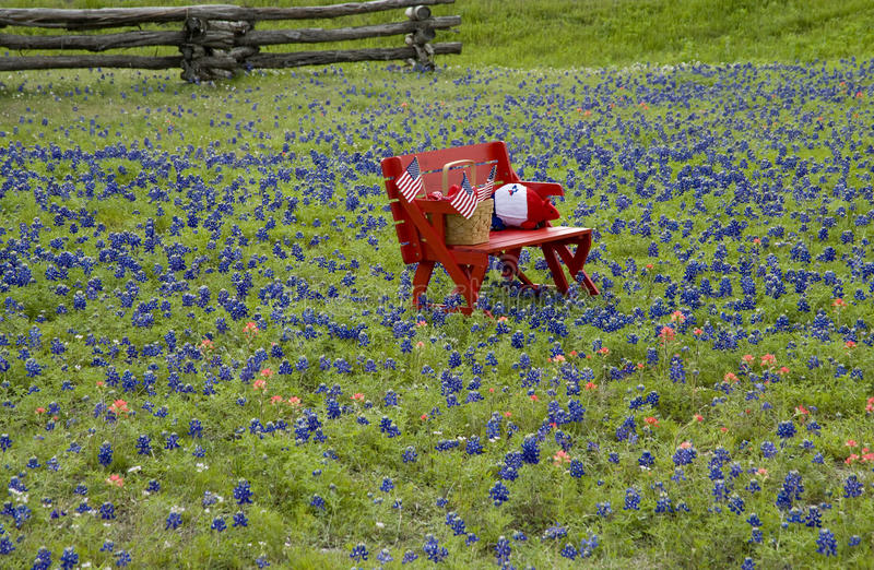 Red bench in Bluebonnet field stock photos