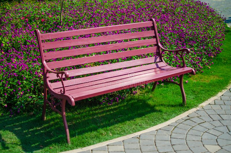 Red bench in front of pink flower background at park in chaingmai,Thailand. A bench stand in front of pink flower at national park in Chaingmai, Thailand royalty free stock photos