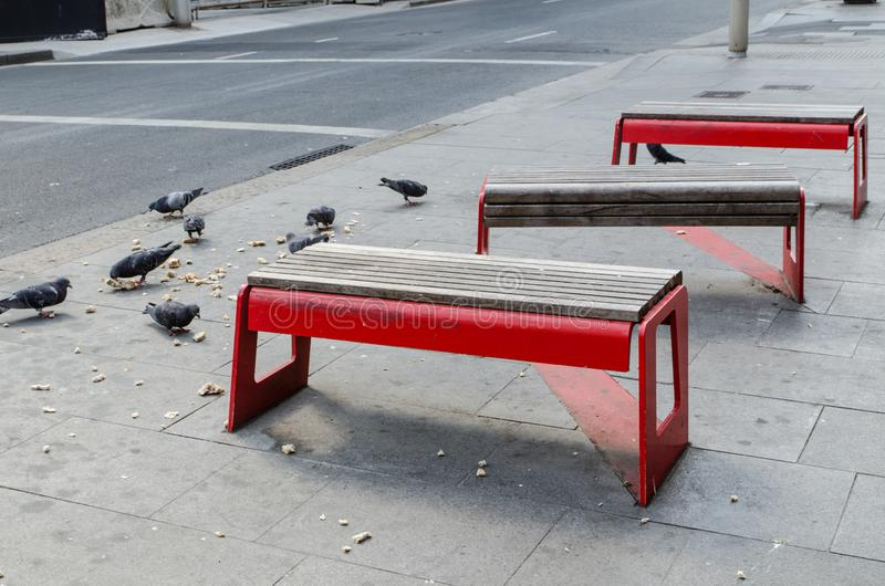 Red benches outdoor in public area with many pigeons eating a piece of bread on the ground. stock images