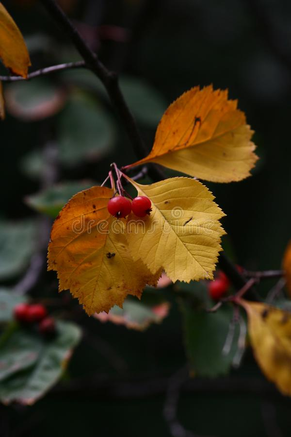 Autumn. last days before winter royalty free stock images