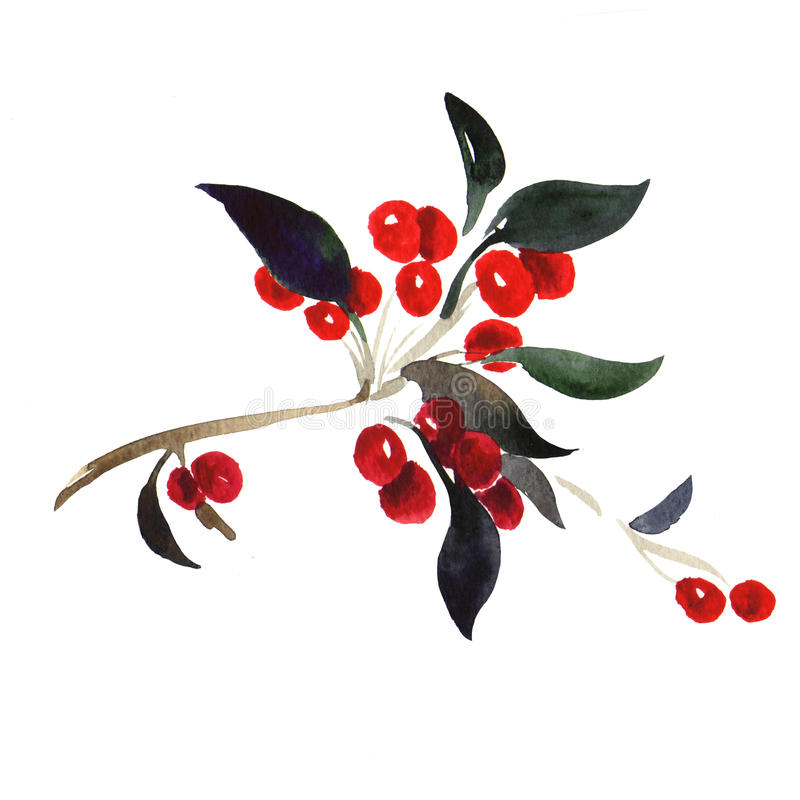 Red berries on branch isolated royalty free illustration