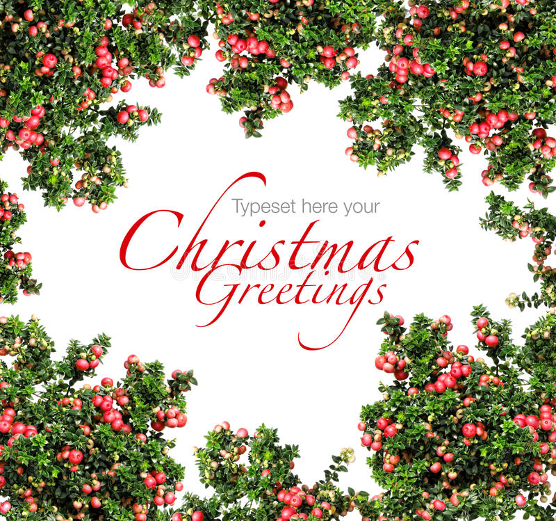 Download Red Berries Christmas Garland Stock Photo - Image of seasonal, evergreen: 21019886