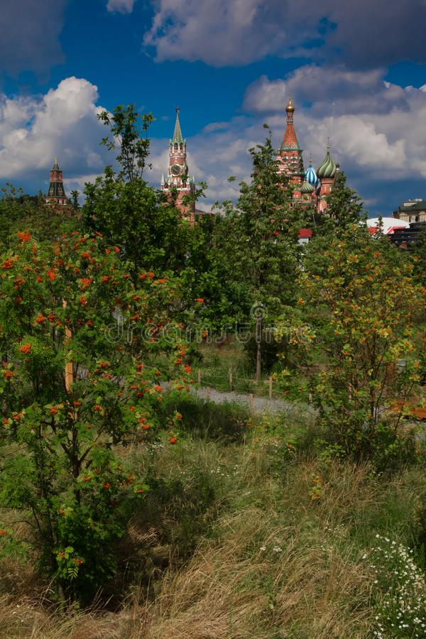 Red berries of mountain ash in Moscow. The Moscow Kremlin is visible among the green branches of deciduous trees. Moscow park Zaryadye royalty free stock images