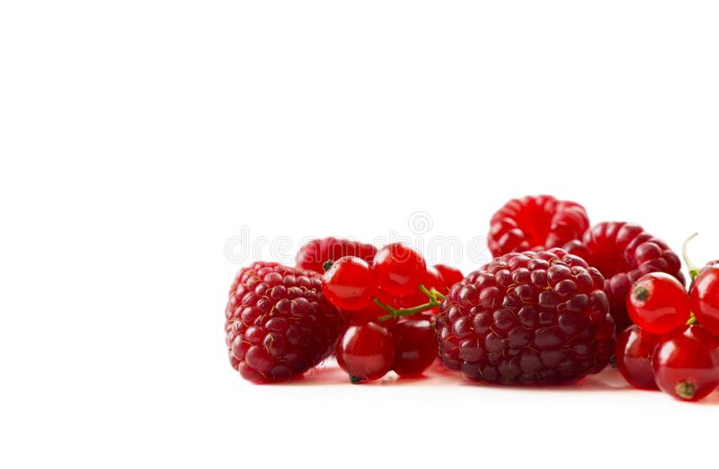 Red berries on white background. Ripe currants and raspberries. Ripe berries close-up. Background of mix berries with copy space f stock photos