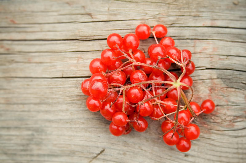 Download Red berries stock image. Image of up, decoration, gray - 33049375
