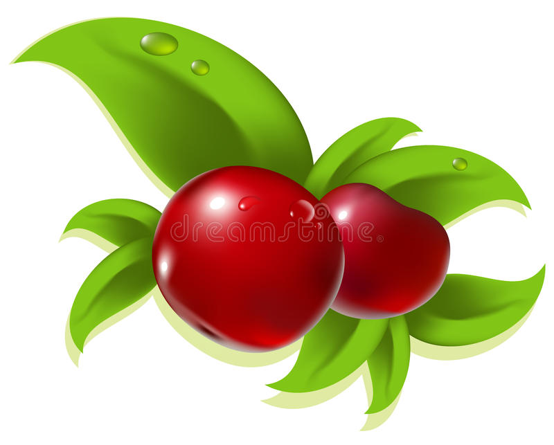 Download Red berry stock vector. Image of frayed, white, draw - 23426100