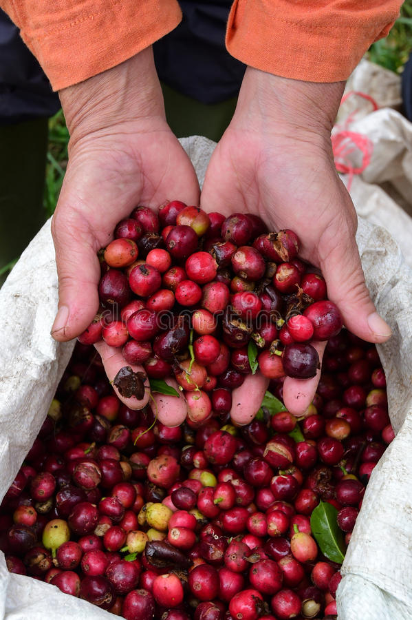 Red Berry Coffee royalty free stock photos
