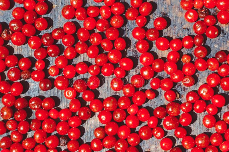 Red berry on a tray royalty free stock images