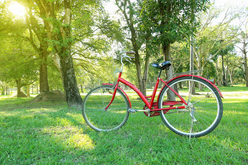 red bicycle in garden with sunshine stock photos