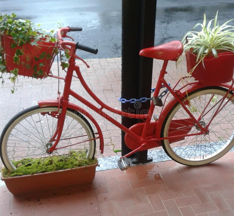 Red bike in Italy with flowers royalty free stock photos