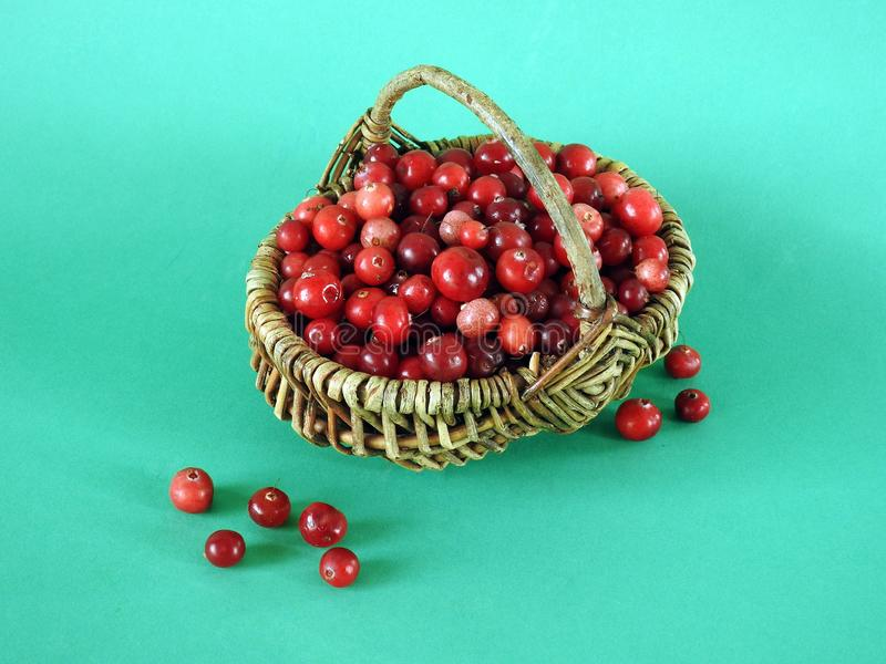 Red bilberry in autumn in wicker , Lithuania royalty free stock photos
