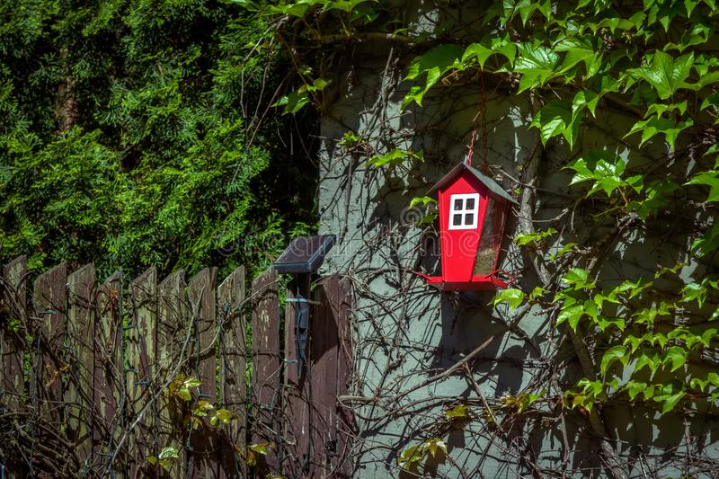 Red bird feeder hanging on a stone wall. In a garden with green trees stock photos
