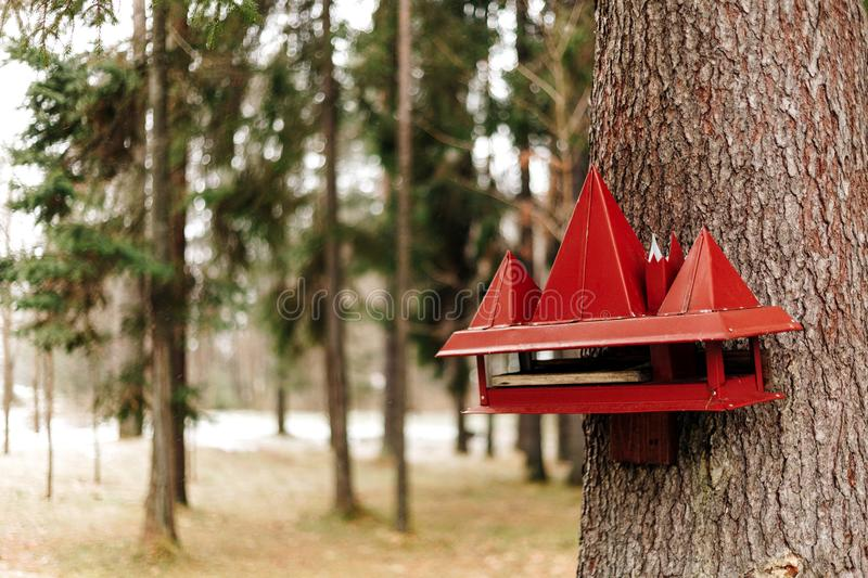 A red bird and squirrel feeder royalty free stock image
