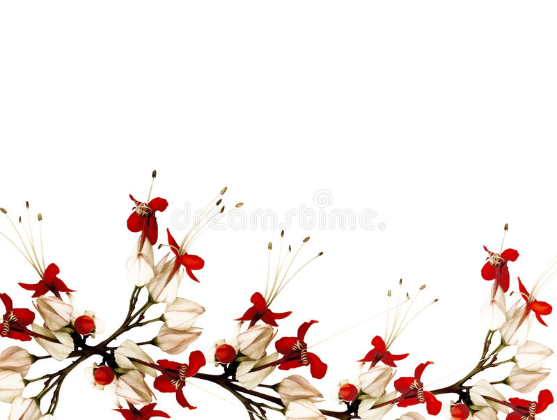 Download Red And Black Butterfly Flowers Stock Photo - Image: 13469418