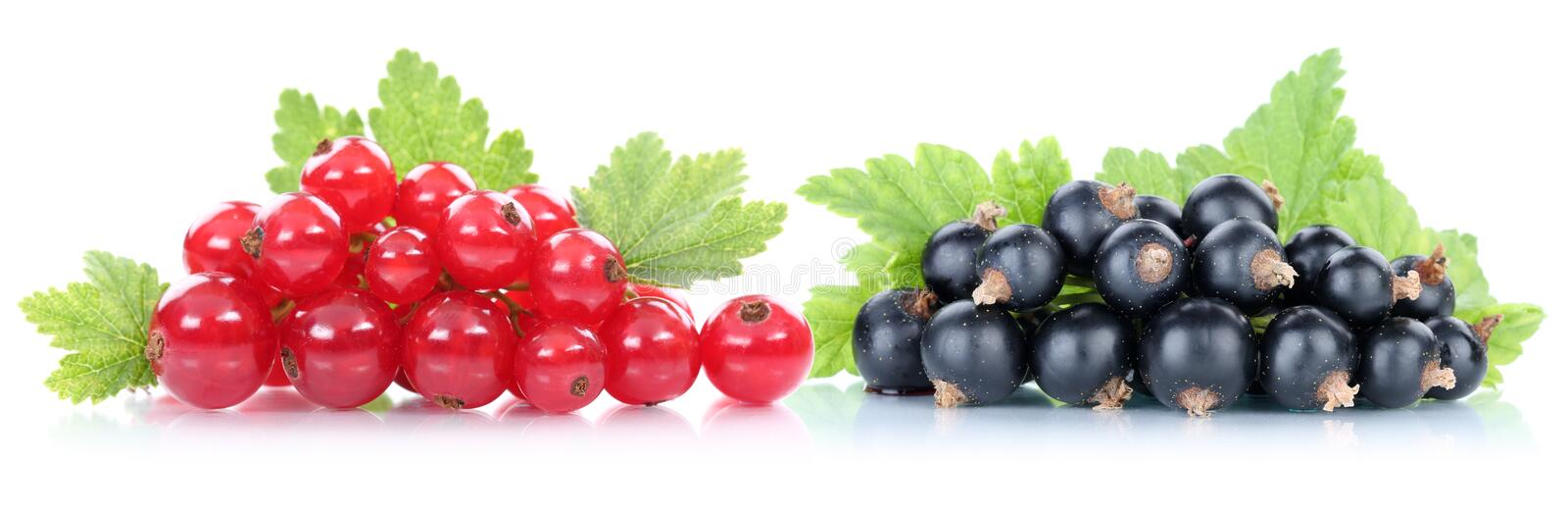 Red and black currant currants berries fruits royalty free stock photo