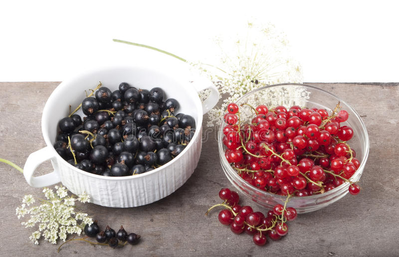 Red and black currant stock photo
