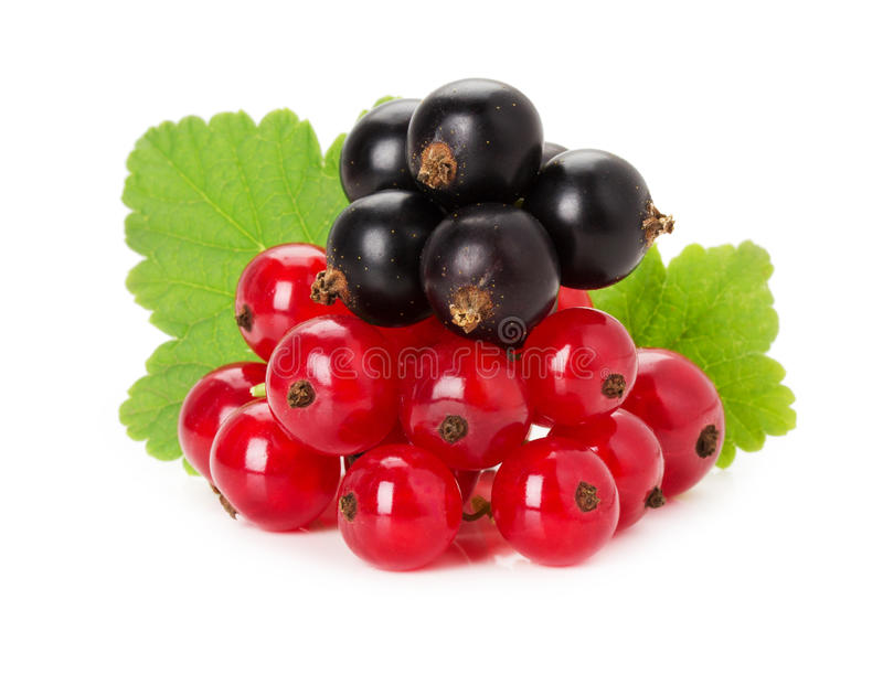 red and black currants with leaves isolated on the white background royalty free stock image
