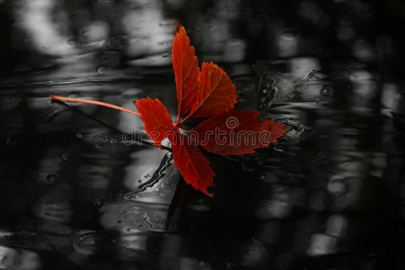 Red, Black, Flora, Black And White stock photo