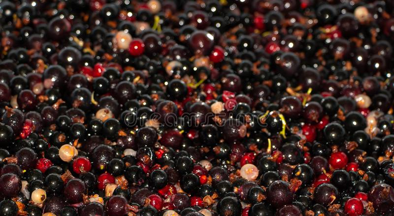 Red black and white currant mixed texture stock images