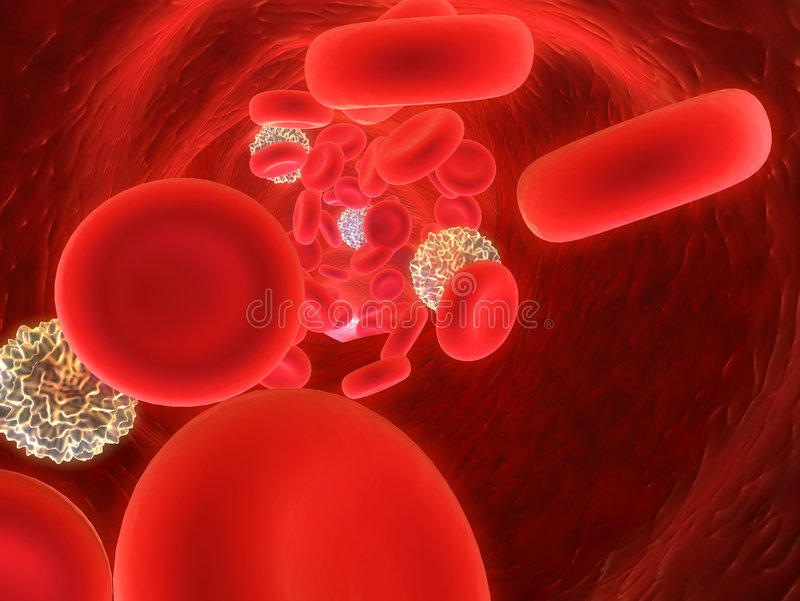 Red blood cells royalty free stock photos