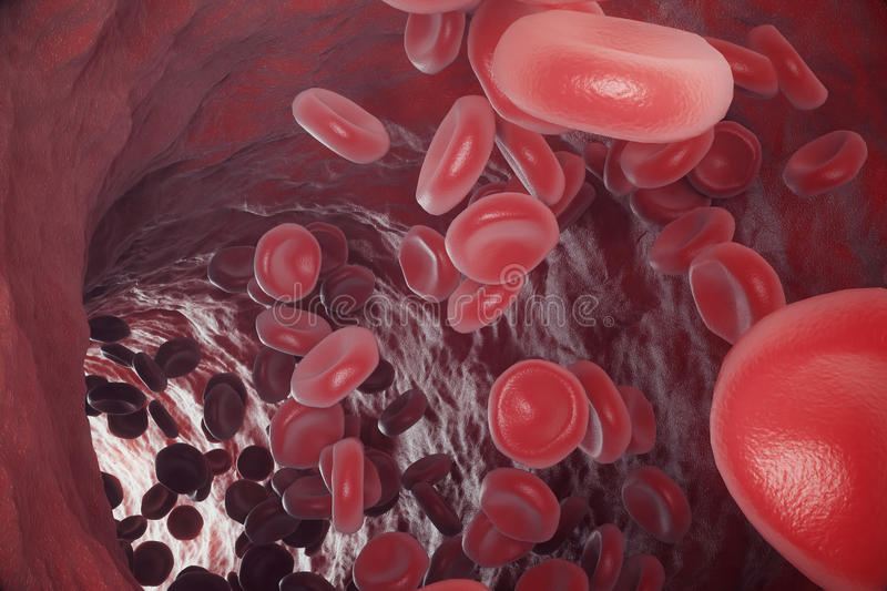 Red blood cells in artery, flow inside body, concept medical human health care, 3d rendering. Red blood cells in artery, flow inside body, concept medical human vector illustration