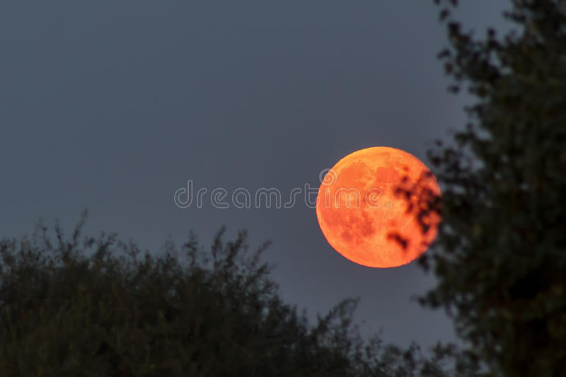 Red blood moon at blue twilight sky stock images