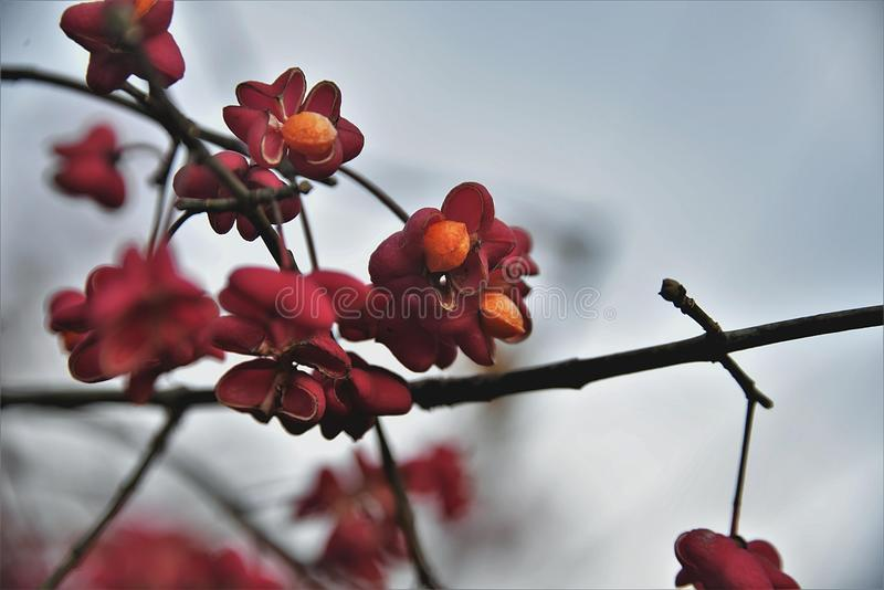 Red, Blossom, Branch, Flora Free Public Domain Cc0 Image
