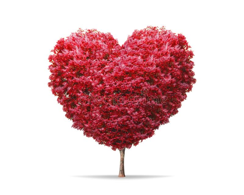 Red blossom tree in heart shape with happiness isolated on pure white background. Valentine tree for decoration romantic concept stock photo
