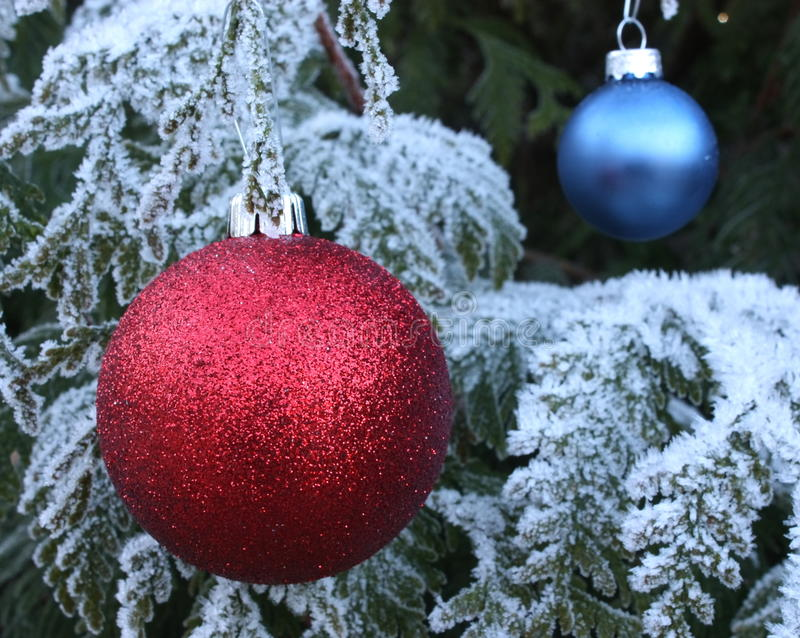 Red and blue baubles on frost tree royalty free stock image