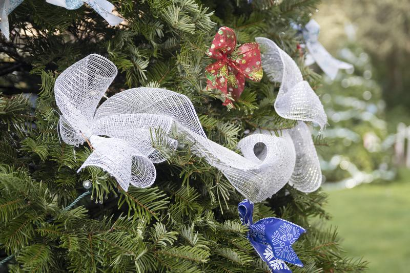 Baubles and Bows. Red and blue bows and a long white ribbon adorn an outdoor Christmas tree at Shore Acres State Park on the Oregon Coast. Another tree is royalty free stock image