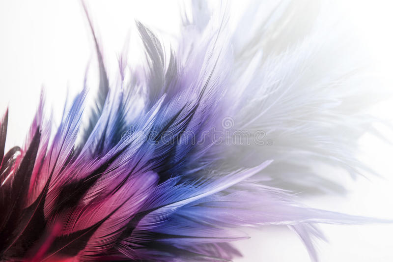 Red and blue feathers stock photography