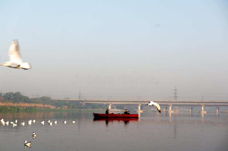 Red boat rowing into the middel of a river early in the morning in the middle of seagulls. Varanasi, India - circa 2019: red boat rowing into the middel of a stock images