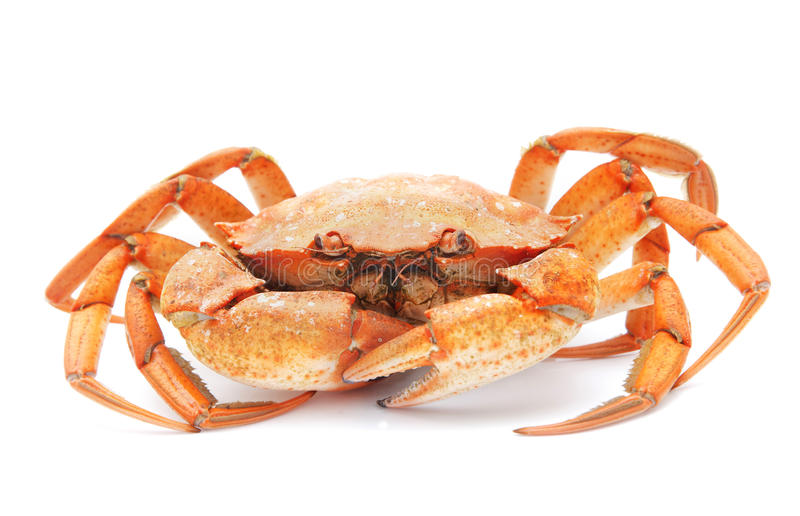 Red boiled crab isolated on white background royalty free stock photos