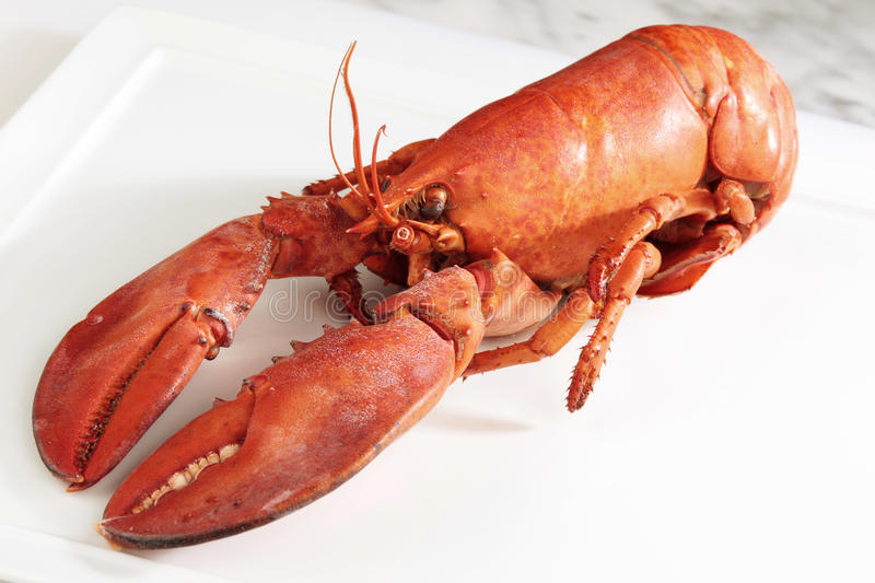 Download Red boiled lobster stock photo. Image of healthy, animal - 10163920