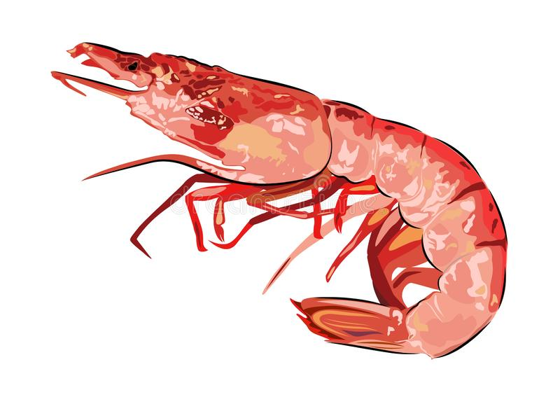 Red boiled shrimp Realistic vector Seafood picture royalty free stock image