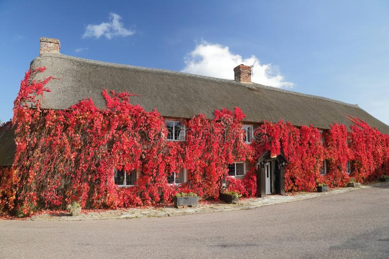 Red Boston ivy in autumn stock photography