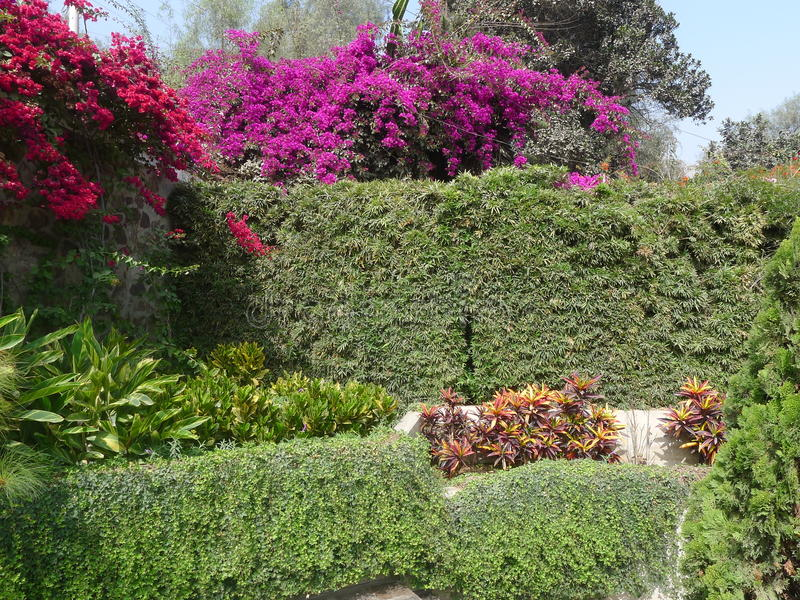 Download Red Bougainvilleas Over A Plant And Stone Walls In Lima Stock  Photo   Image Of