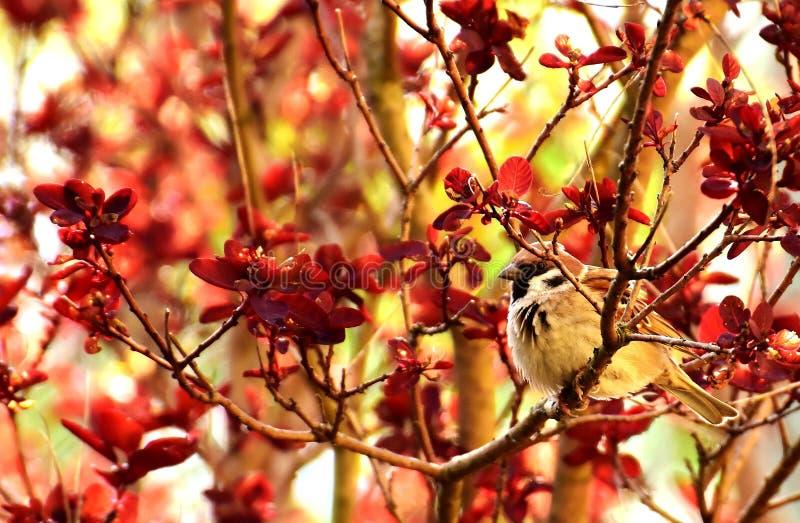 Red, Branch, Autumn, Leaf Free Public Domain Cc0 Image