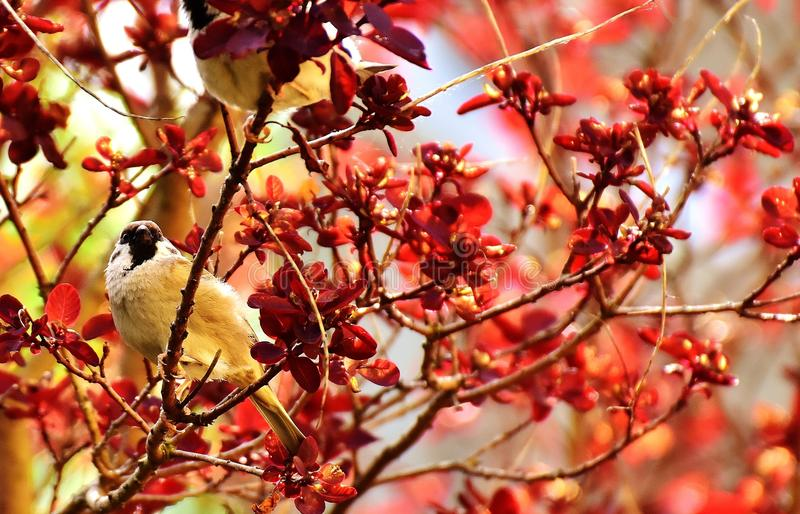 Red, Branch, Autumn, Twig stock images