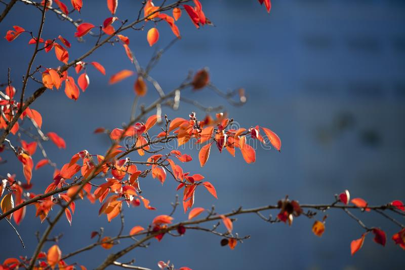 Red, Branch, Sky, Nature stock photo