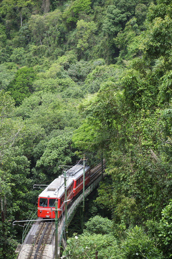 Red Brazilian Train Green Jungle Tijuca Rio de Janeiro. Red Brazilian train travels through thick green jungle at Tijuca National Forest in Rio de Janeiro Brazil stock photo