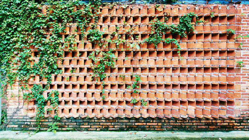 Red brick wall. With green plants stock images