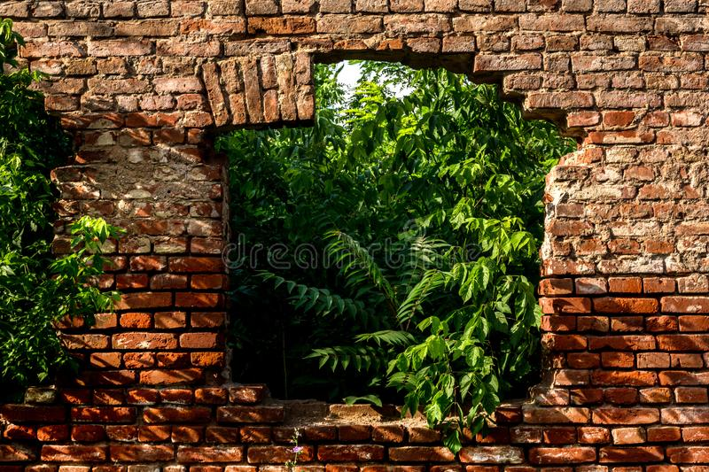 Red brick wall with old ruin window on house and green plants inside home royalty free stock image