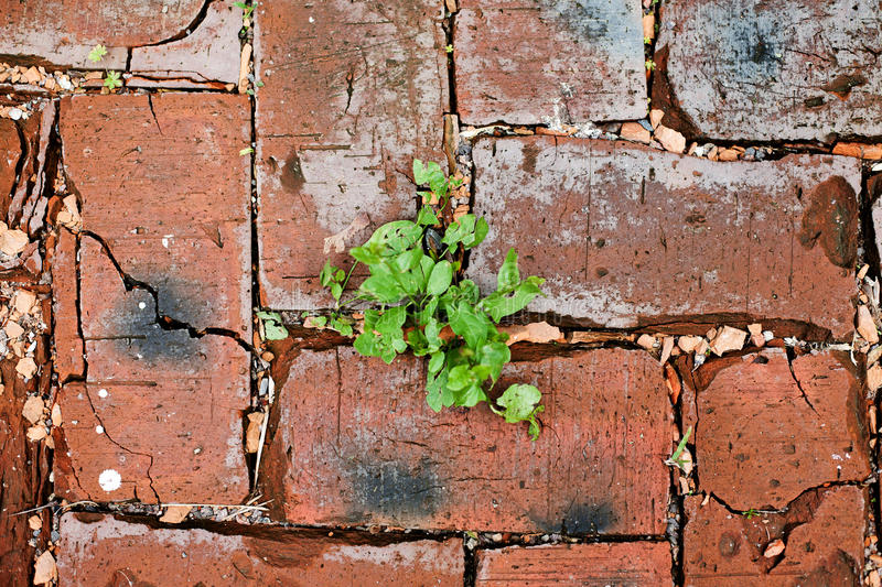 Red bricks texture with green grass royalty free stock photography