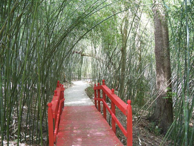 Red bridge leads to a curved path. Red oriental looking bridge leads to a curved path through a bamboo garden stock image