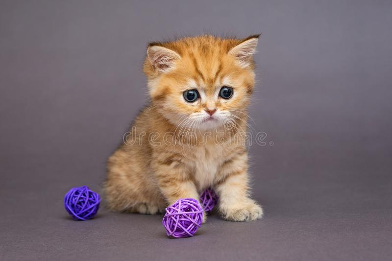 Red British kitten playing with balls stock photos