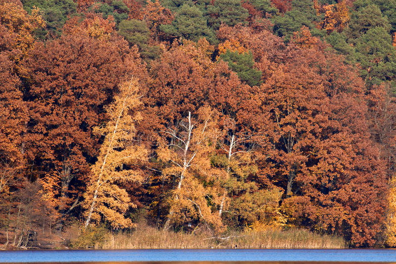 Red-Brown Fall Foliage at Lake stock photos