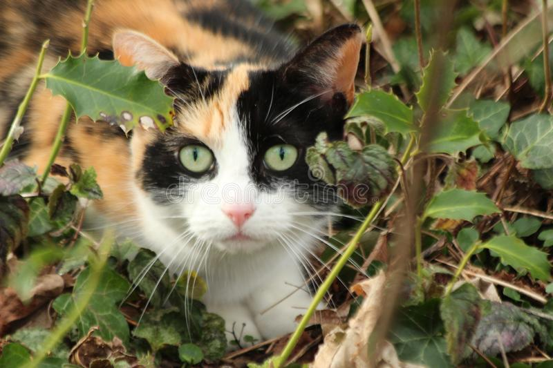 Red brown white and black cat is crawling between the plants in a park. stock photos
