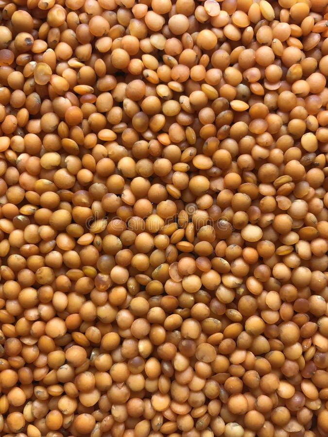 Red bulk lentils. Its can be used in the food and health industries, catering, cooking, cookery, restaurant, etc.. for stylish presentation or Issues related royalty free stock photography