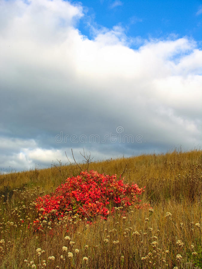 Free Red Bush And Flowers In The Field Stock Image - 51126001